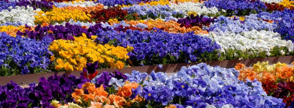 Plantation de plantes et de fleurs au Luxembourg