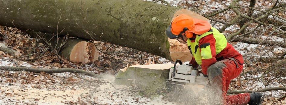 Abattage d'arbres dangereux au Luxembourg