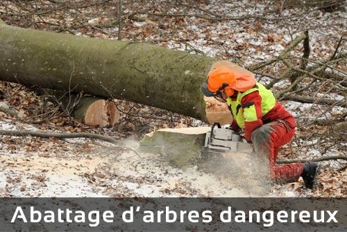 Abattage d'arbres dangereux