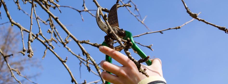 Élagage d'arbres et arbustes au Luxembourg