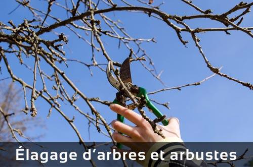 Élagage d'arbres et arbustes
