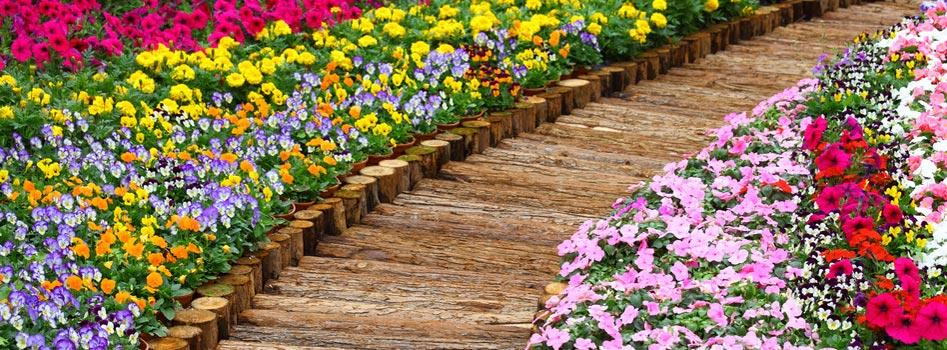 Massifs de fleurs au Luxembourg