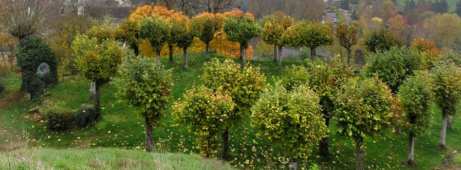 Plantation d'arbres au Luxembourg